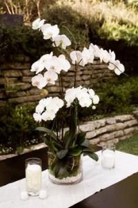 decoração com orquídea em mesa externa