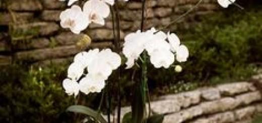 decoracao-com-orquidea-branca