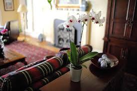 decoração com orquídea em sala