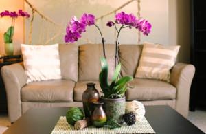 decoração com orquídea em centro de sala