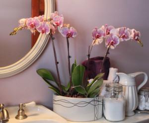 decoração com orquídea em banheiros