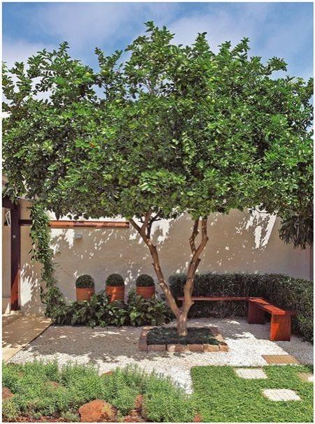 árvore jardim