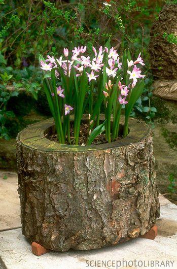 jardim rústico com flores