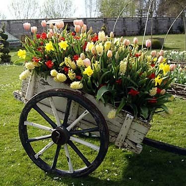 Vancouver, Sept. 22, 2008 Hyacinths, tulips and daffodils in a wagon. With Steve Whysall story about gardening in Holland. (Photo: Handout) [PNG Merlin Archive]