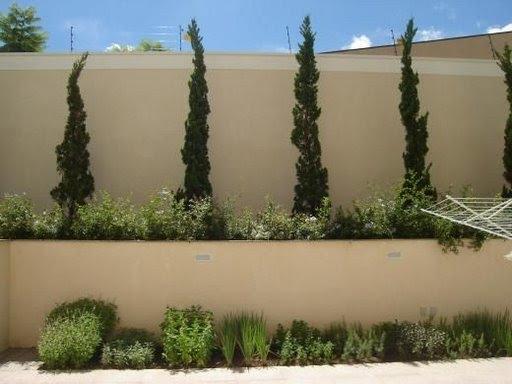 No chão, pequena horta com ervas frescas