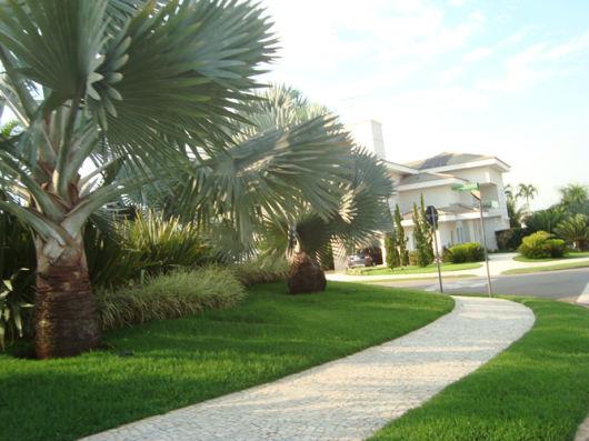 plantas gramado