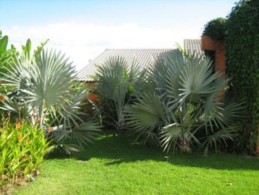 jardim gramado casa