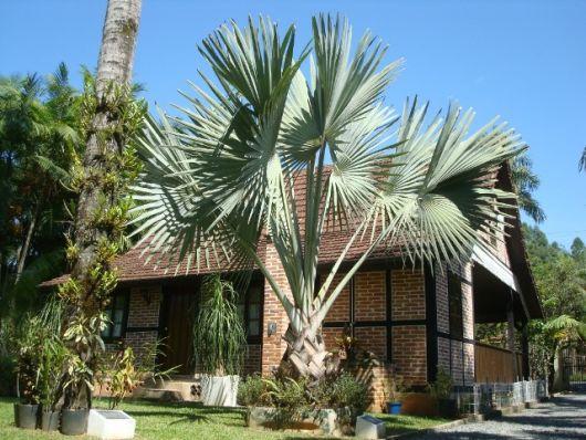 decoração jardim com coqueiro