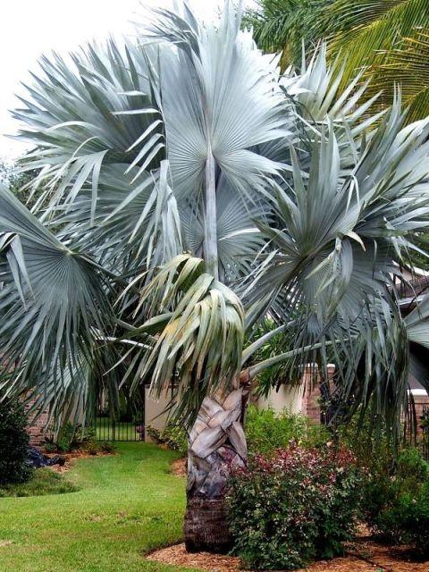 jardim com palmeira