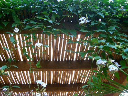pergolado de bambu plantas