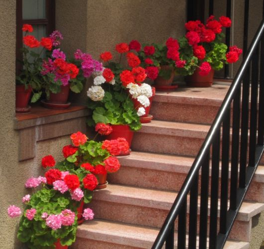 decoração de escada com flores vermelhas