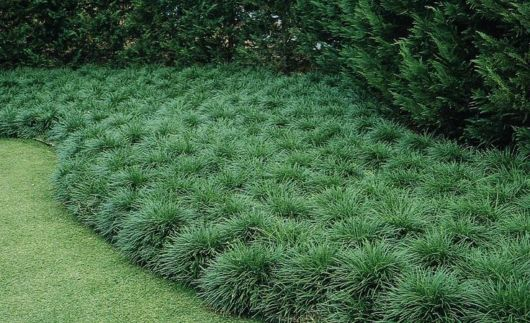 Image Result For Grseed For Shady Areas In Florida