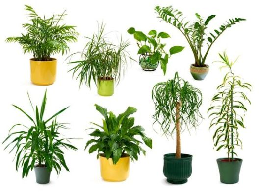 jardim de inverno no quarto tipos de plantas
