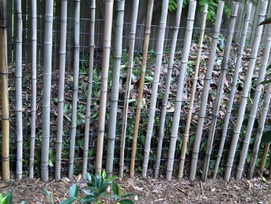 cerca-para-jardim-como-e-bambu