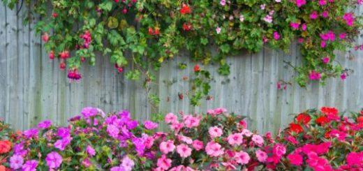 cerca-para-jardim-destaque