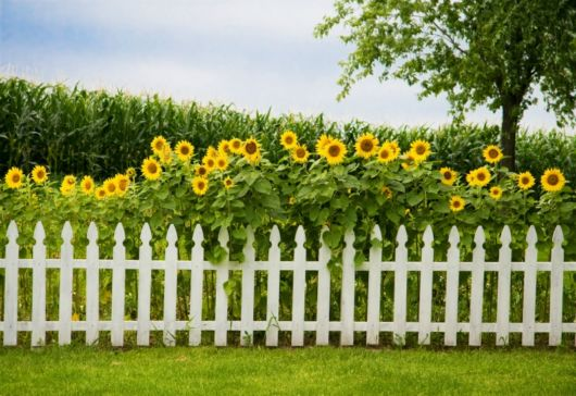cerca-para-jardim-madeira