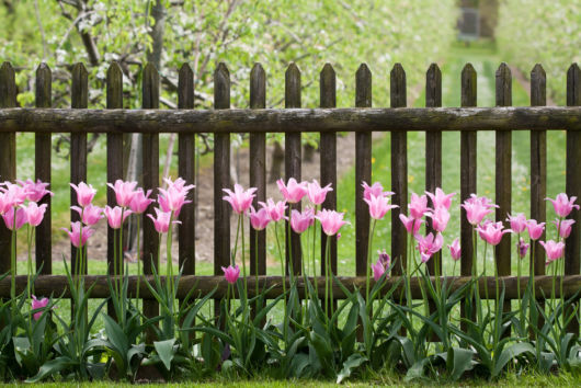 proteção do jardim e ainda combinou bem com as flores de cores vivas