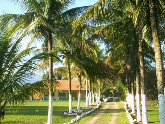entradas-de-chacara-palmeira