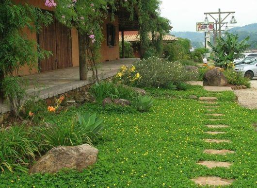 amendoim-rasteiro jardim