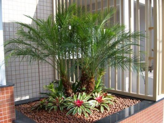 jardim-de-inverno-com-palmeiras