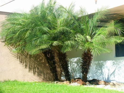jardim-palmeira-pequena