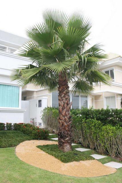 paisagismo-palmeira-washingtonia