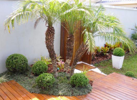 palmeira-de-pequeno-porte