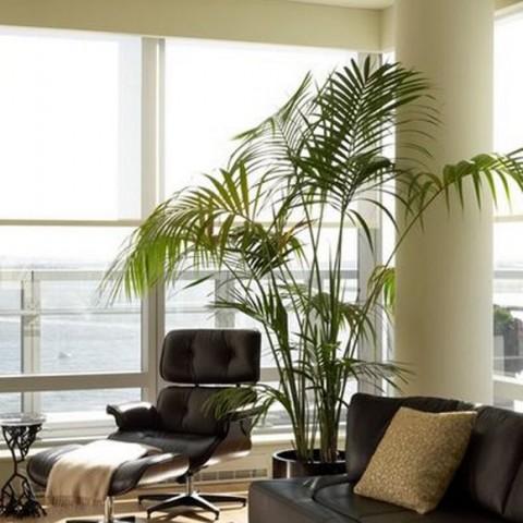 palmeira-interna-para-sala