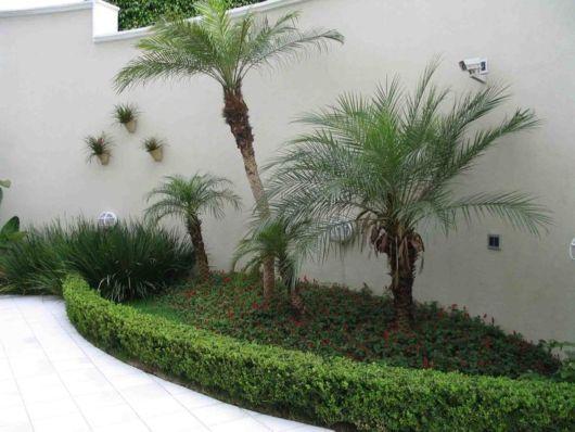 palmeiras-de-jardim-de-inverno