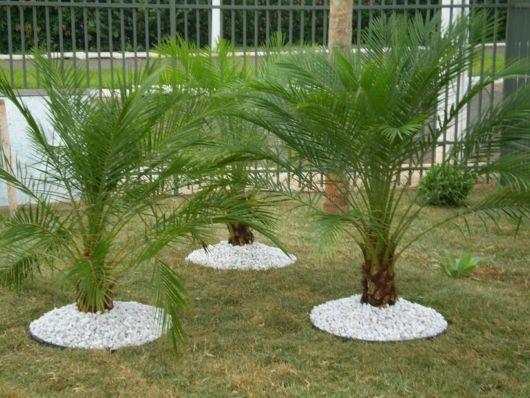 palmeiras-de-pequeno-porte