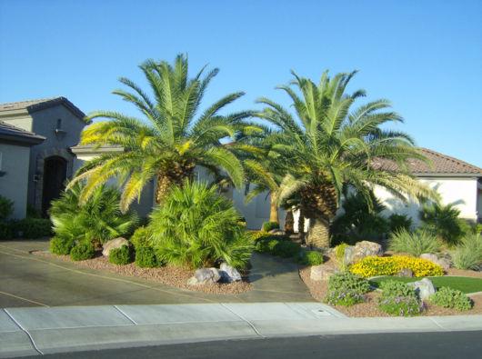 palmeiras-grande-porte