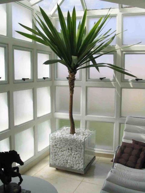 palmeiras-internas