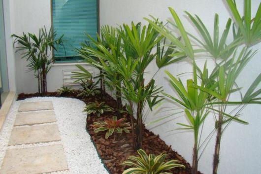 palmeiras-jardim-de-inverno