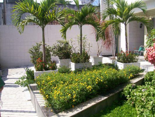 palmeiras-ornamentais-ideias