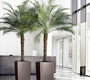 palmeiras-para-jardim-interno
