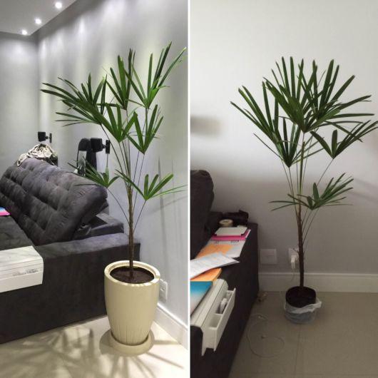 palmeiras-pequenas-para-sala