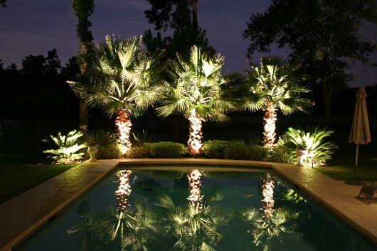 palmeiras-pequenas-piscina