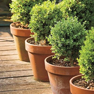 vasos-para-jardim-rustico-de-barro