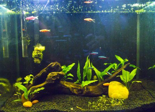 aquario-de-agua-doce