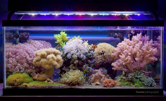 aquario-de-agua-salgada