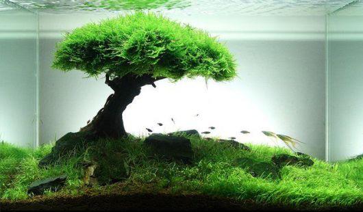 aquario-plantado
