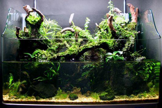 aquarios-modelos-destaque