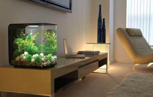 aquario-pequeno-ideias