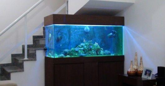 fotos-de-aquarios-escada