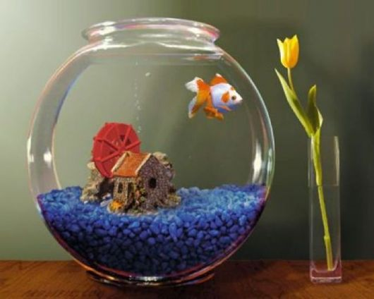 fotos-de-aquarios-pequeno
