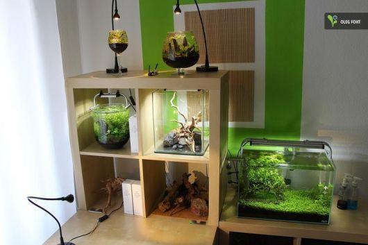 fotos-de-aquarios-pequenos