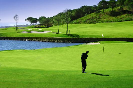 grama-coreana-japonesa-campo-de-golf
