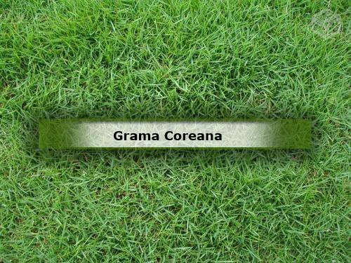 grama-coreana-japonesa-foto-de-como-e