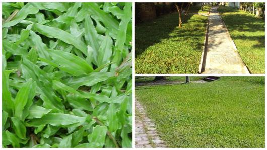 gramado sempre verde