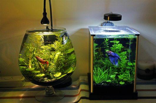modelo-de-aquario-pequeno